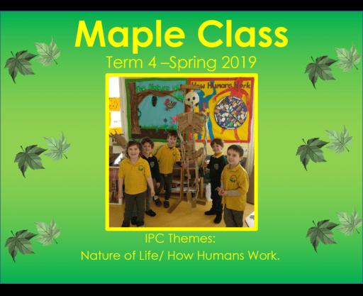 Maple Class Term 4 - 2019