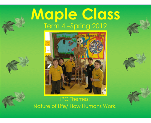 Maple Class Term 4 - 2019